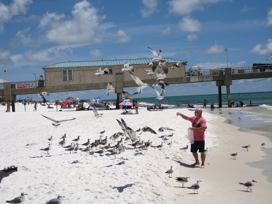 I encountered a man who was feeding the birds, while waking down the beach in Fort Walton, FL.
