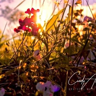 Wildflowers adorned by the sunset.