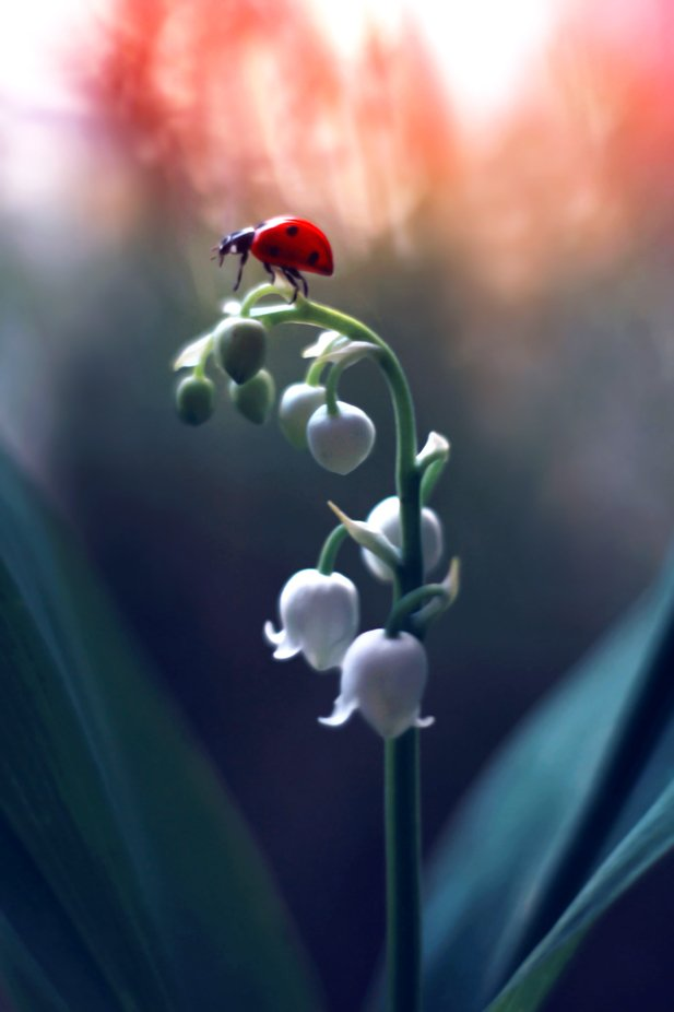 Lily of the valley  by Elena_Andreeva - Colorful Macro Photo Contest