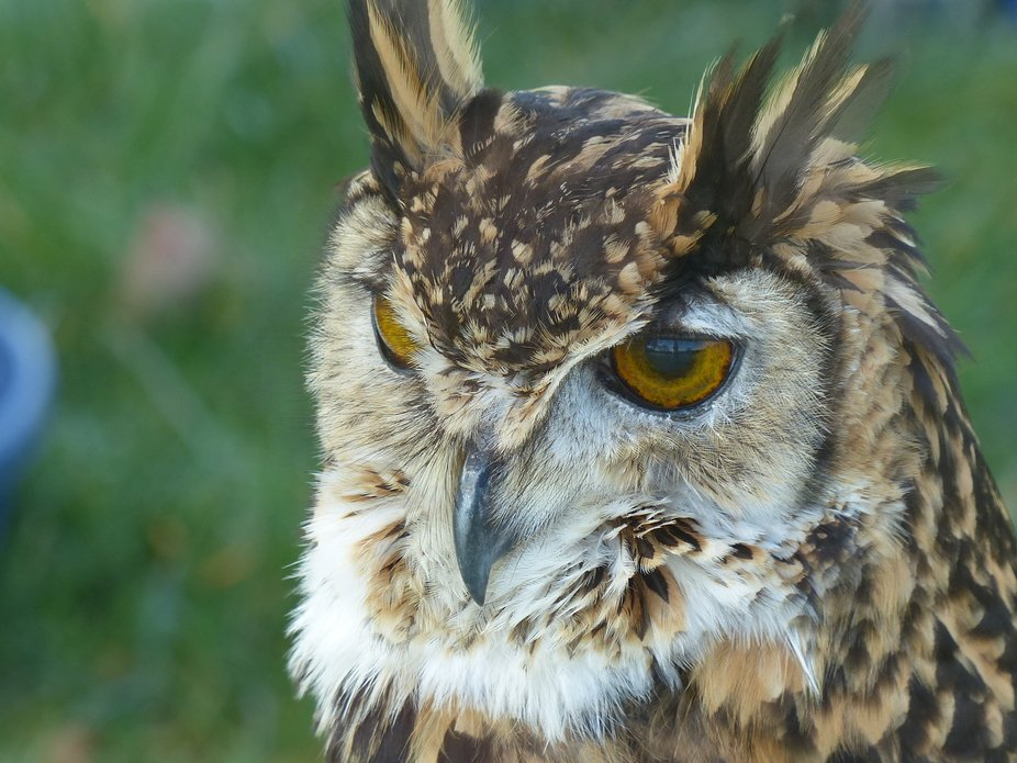 Taken at Wild Wings Birds of Prey centre