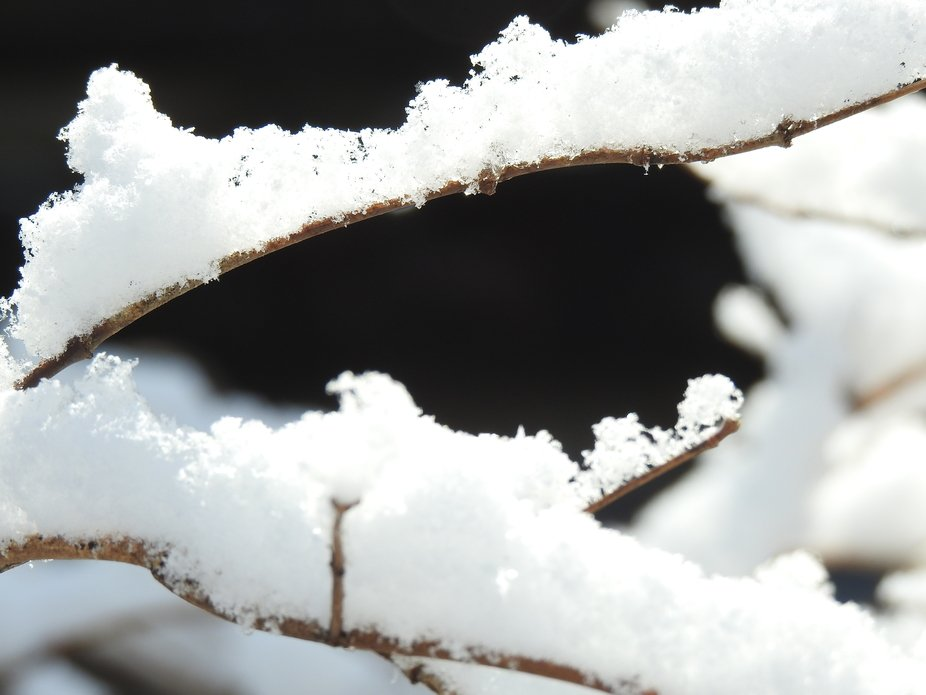 This day after snow The eyes have it in macro Seeing winter small