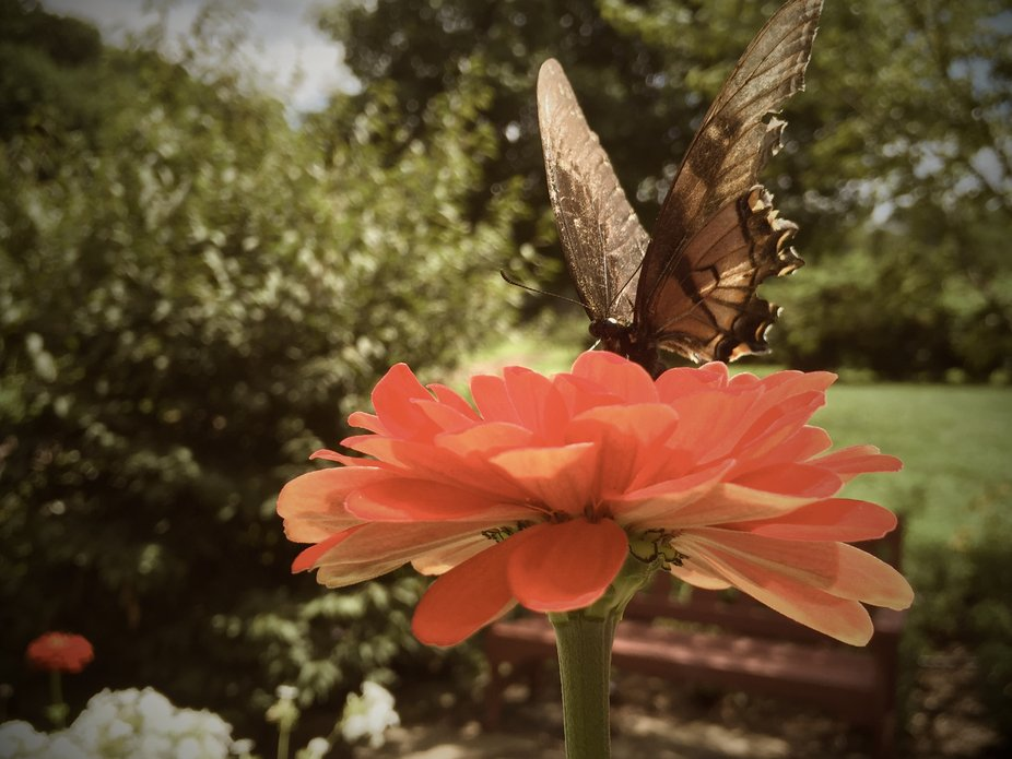 Butterfly garden at Solebury Orchards