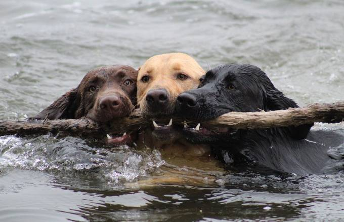 Teamwork by Renaepaul13 - Dogs In Action Photo Contest