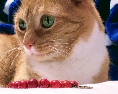 Beautful cat portrait