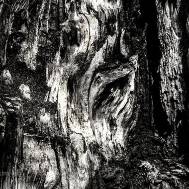 Details of a Tree Trunk
