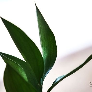 Floral Greens
