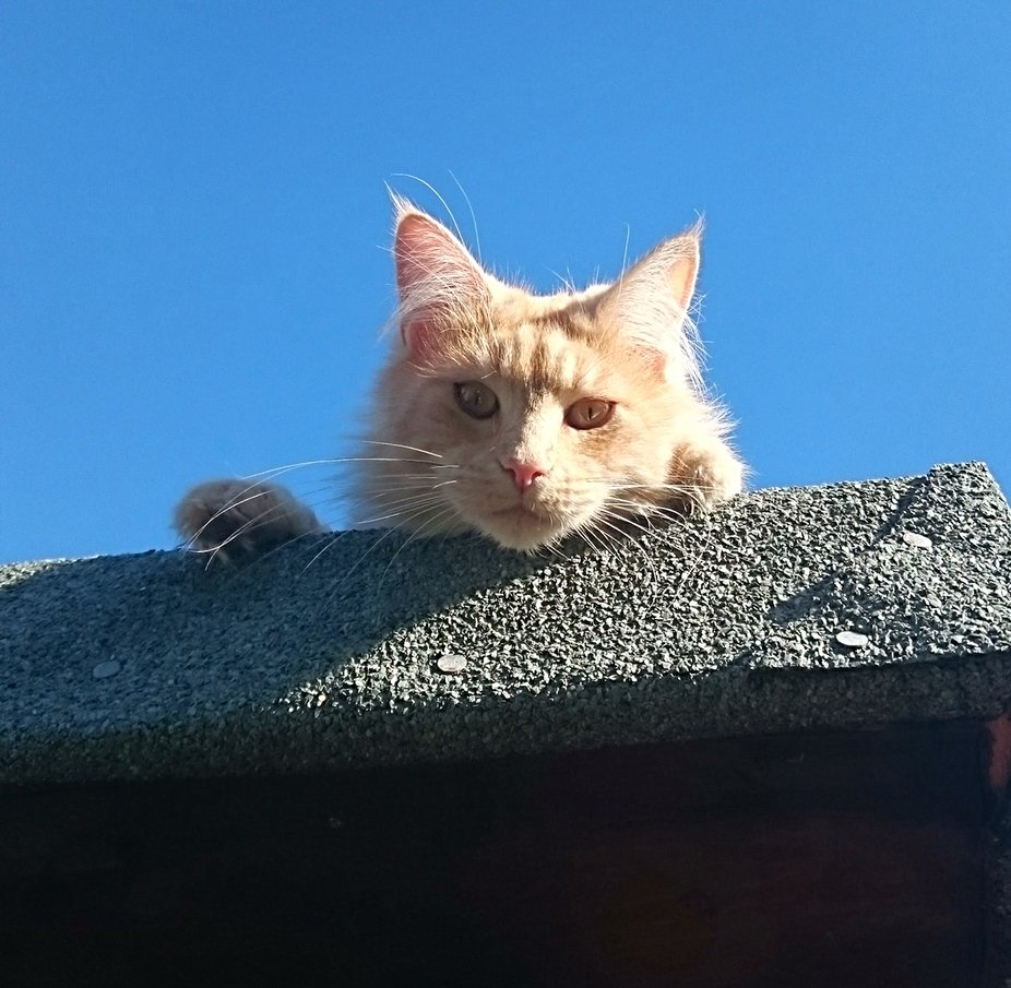 Sitting on a hot tin roof