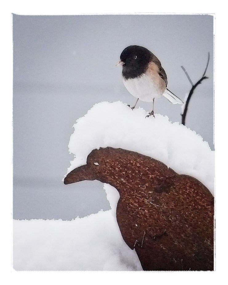 A rare snow in western Washington put a few inches of snow in our backyard. The birds seemed to enjoy the unusual white stuff...