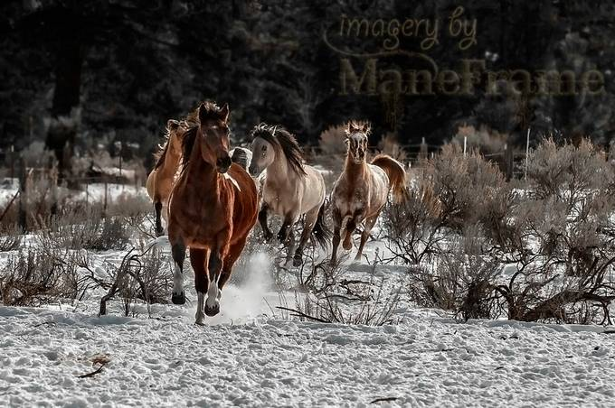 The Charge by ManeFrame - Social Exposure Photo Contest Vol 21