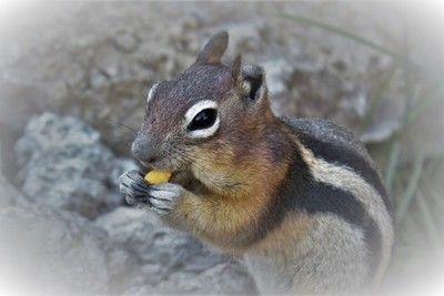 Lunch Time in Yellowstone National Park