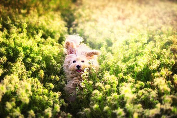 Happy by antocamacho - Dogs In Action Photo Contest