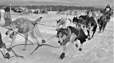 Iditarod Race 2019, Willow Alaska