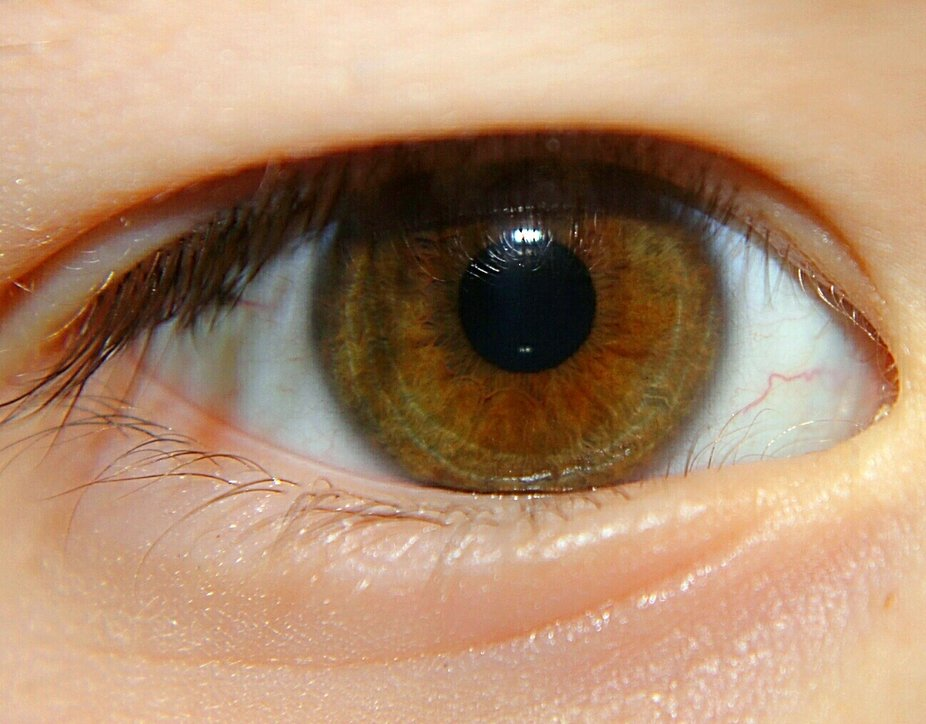 Oh Brown Eyes