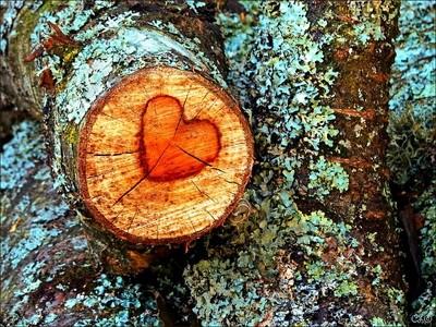 Heart of a tree...