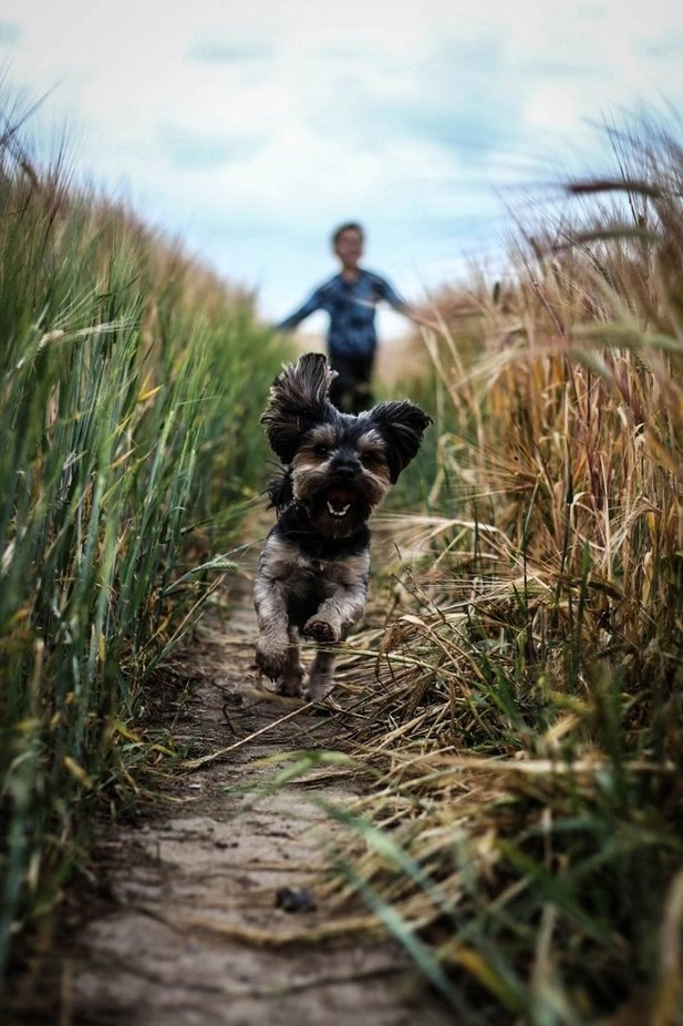 run by Aurimas - Dogs In Action Photo Contest