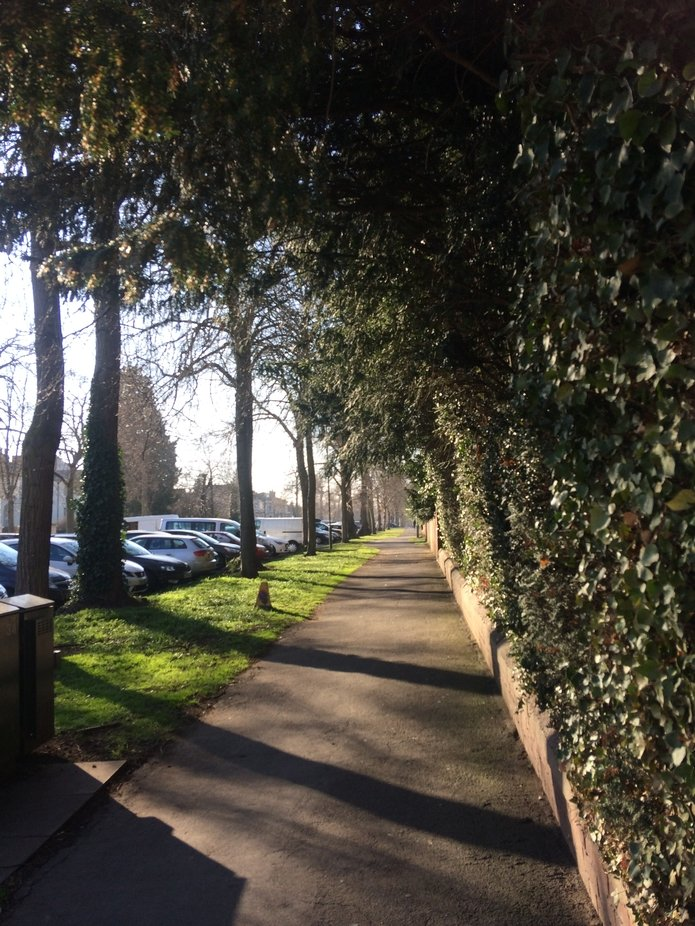 Just looked and saw the beauty and simplicity of a tree lined Avenue; snapped and captured in tim...