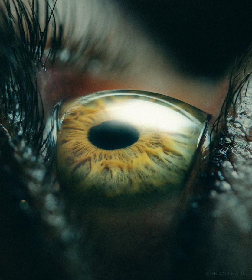 Daydreamer by adrian-borda - Macro Captures Photo Contest