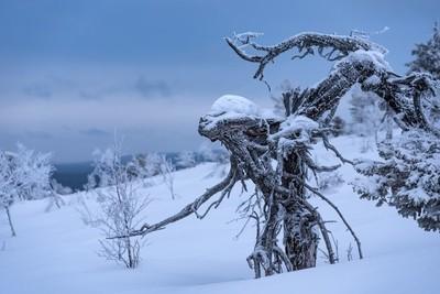 Frozen wooden alien