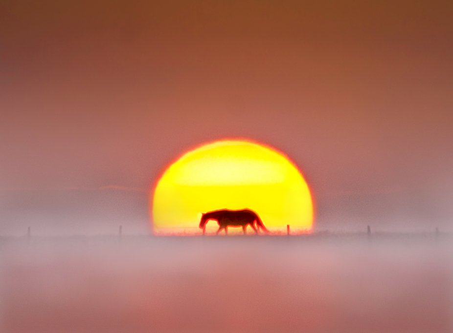 A horse walking on the brow of a hill as the sun was rising on a foggy morning