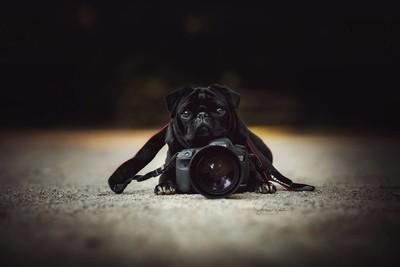Little Photographer