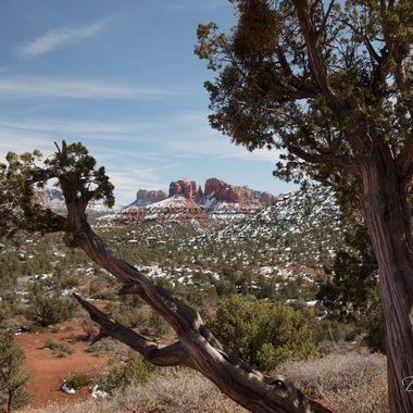 View of snow covered Cathedral Rock in Sedona, Arizona framed by a juniper tree.