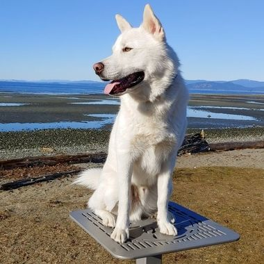 Mowgli posing on picnic table on Parksville beach - Feb 25th, 2019