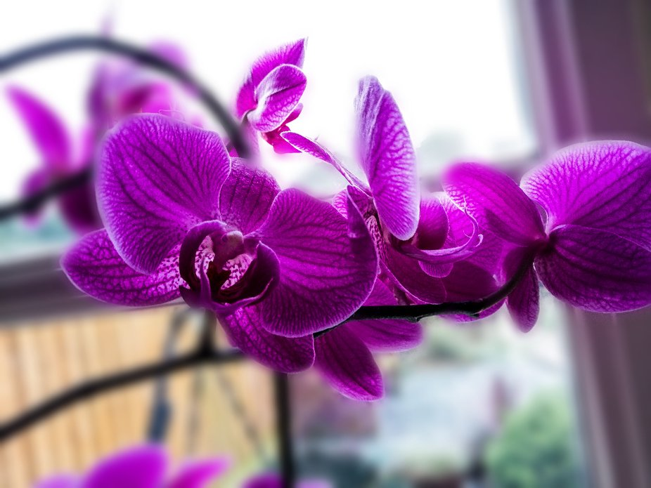 Beautiful Orchid in my mum's kitchen