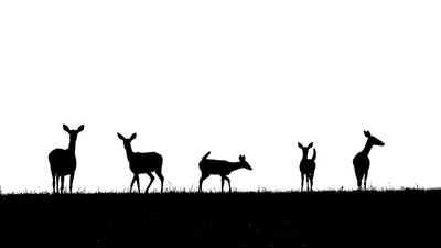 5 Deer on the Horizon