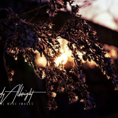The evening sun brings beauty and warmth to this weathered weed, with the promise of Spring on it's way.