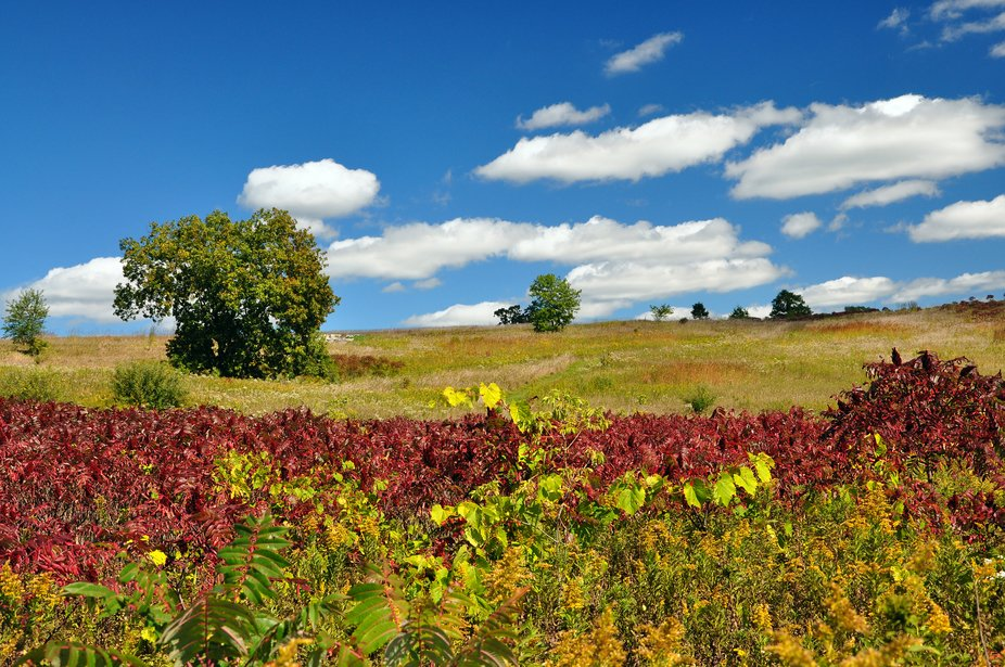 This naturally colored photo was taken on a perfect fall day at Glacial park in Richmond, IL.