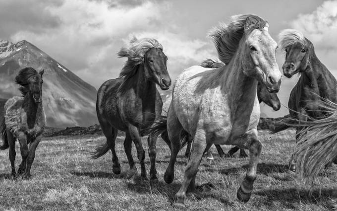 On the Gallop by PJImages - Social Exposure Photo Contest Vol 20