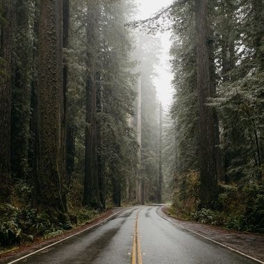 road through a wet redwood forest in fog