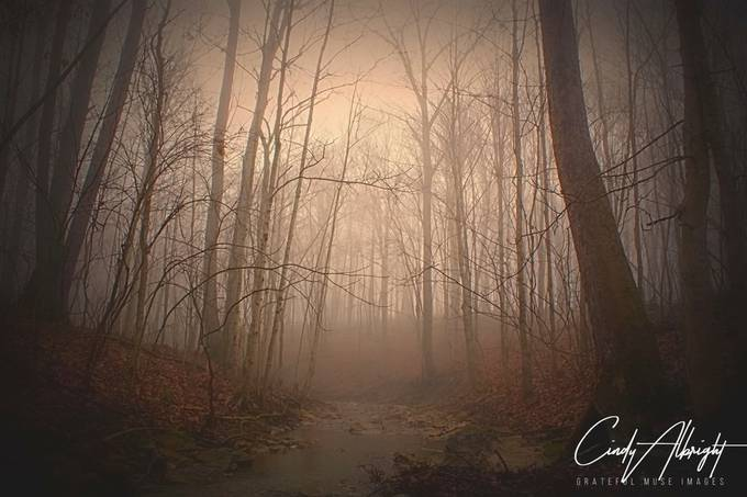 If you listen very closely on a foggy morning in the woods, you will hear the whispers of the water and trees inviting you to come in and dream. 24x36