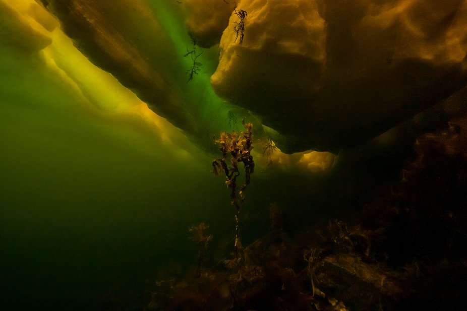 Ice diving in the White Sea in 2011