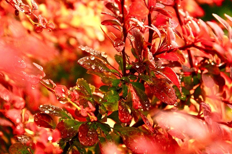 Rain Drops In Bloom