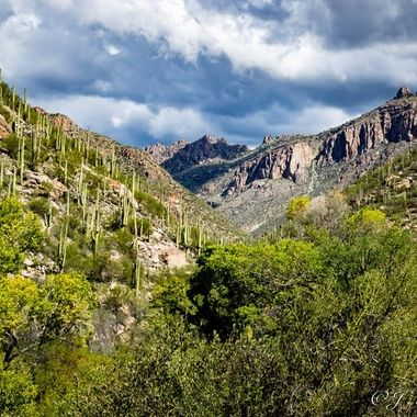 Sabino Canyon View