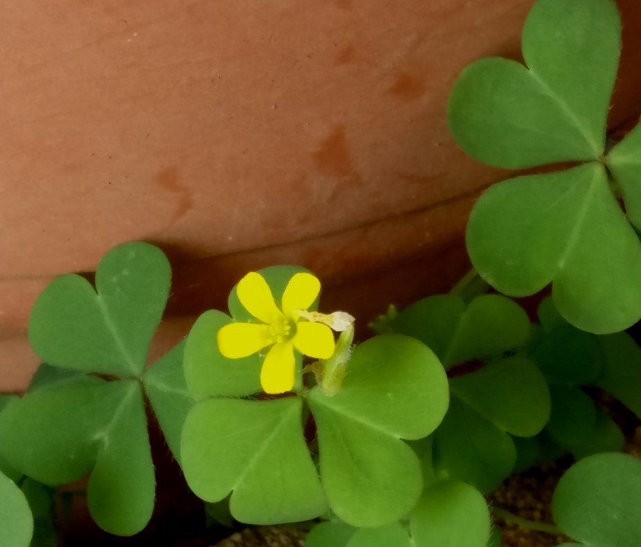 Yellow me......with heart leaves