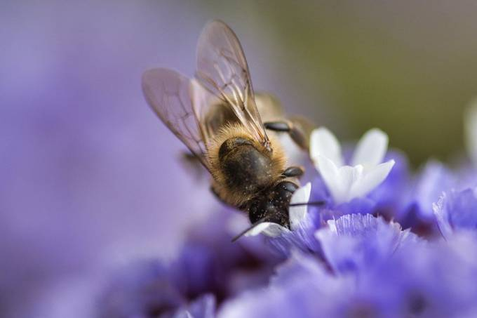 Bee Digging in