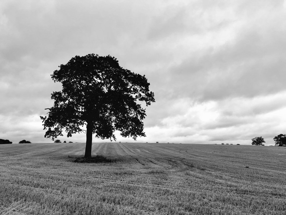 Somehow trees look stronger when they stand alone.