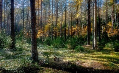 a sunny day at the forest...