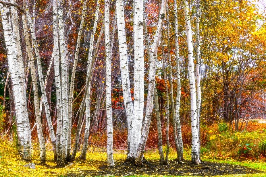 Autumn Still There