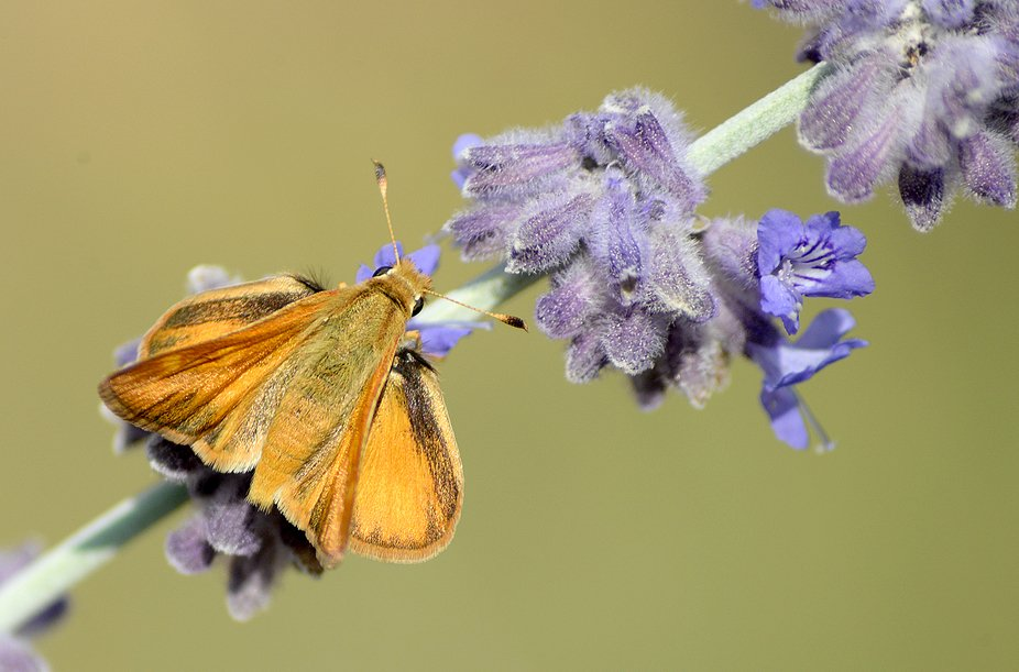 Moth DSC_6040