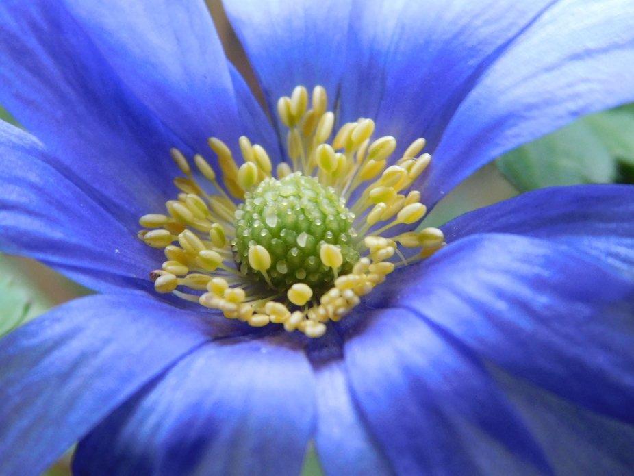 Full blossom close up