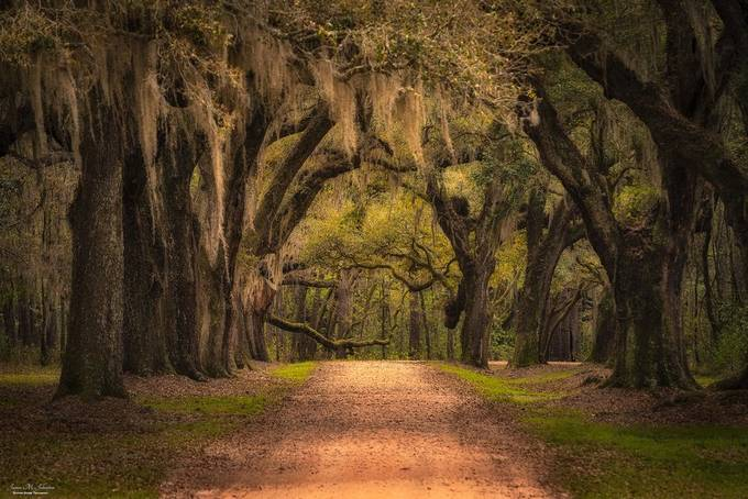 Low Country Serenity by jamesjohnston_3471 - Social Exposure Photo Contest Vol 21