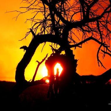 Cradle Sun Set