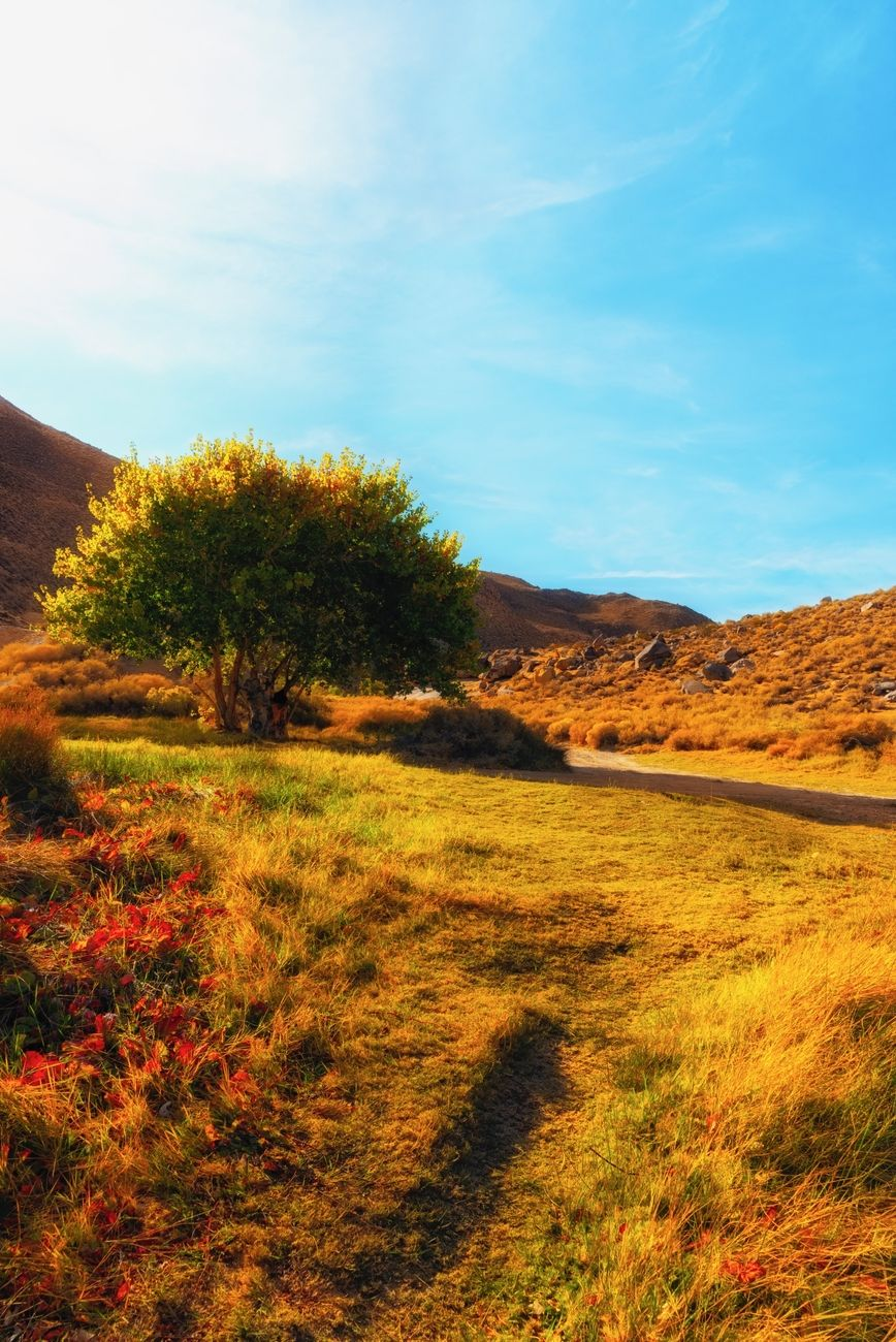 Morning meadow with yellow sunlight shining on tree and grass in Sand Canyon.