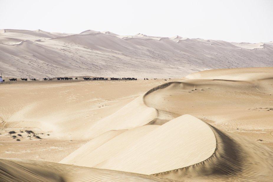 DesertGoats
