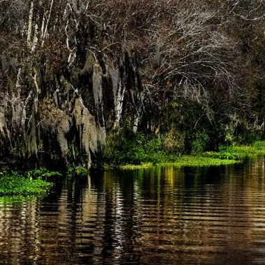 Upstream on the SJR