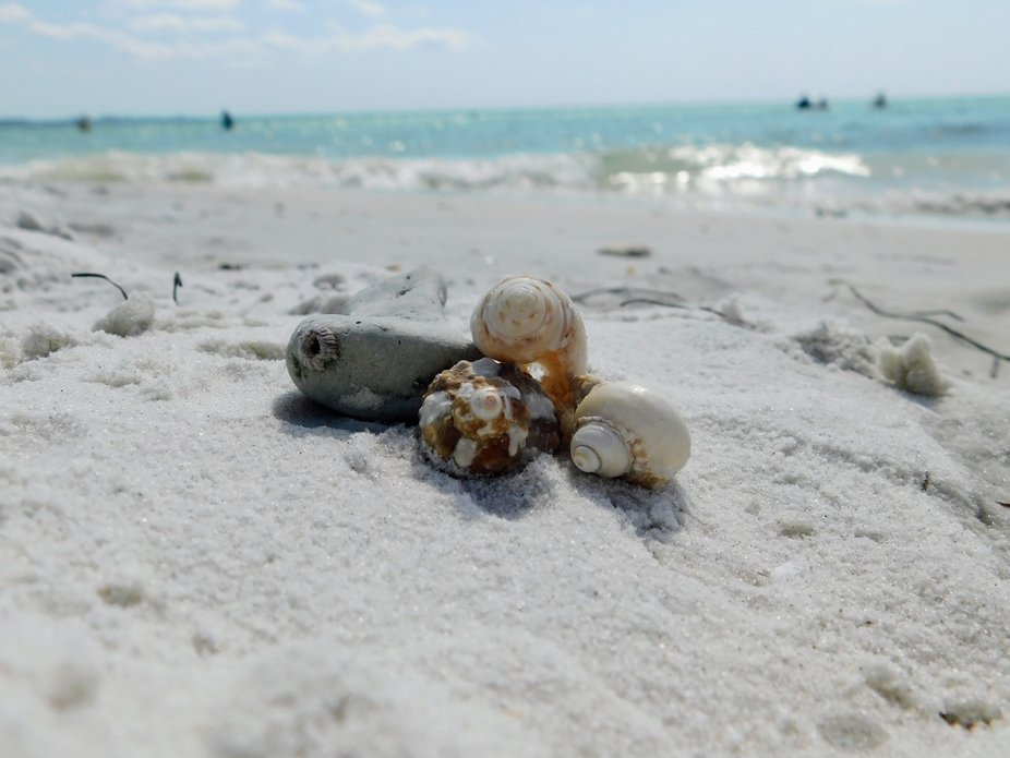 Seashells by the Shore