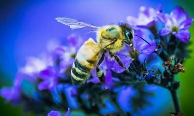 Bee posing..